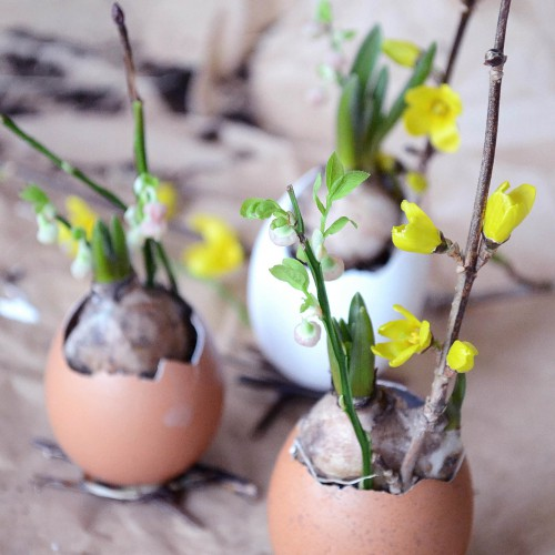 Lökar i ägg