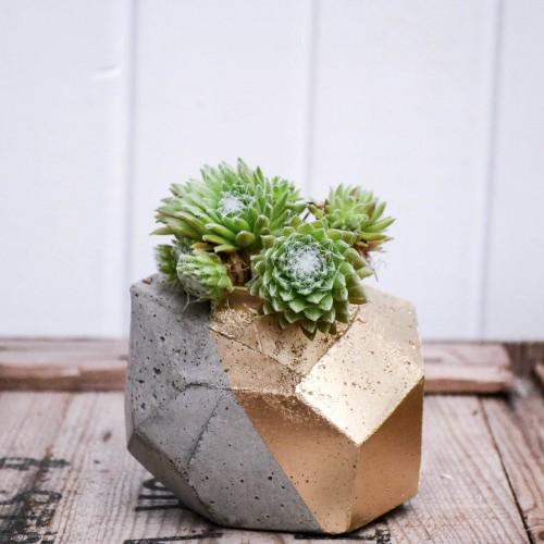 Succulent i betong