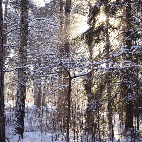 naturbilder-4