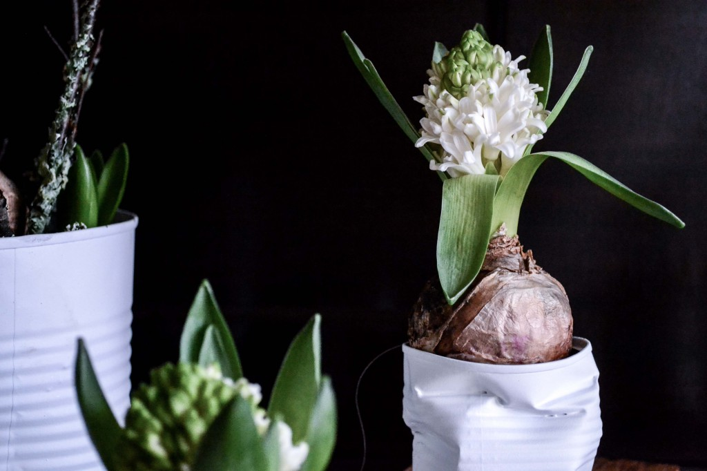 hyacint-4